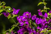 Bilder Garten-40