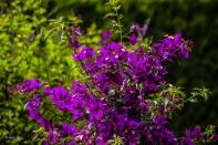 Bilder Garten-52