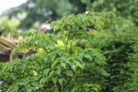 Bilder Garten-60