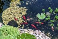 Bilder Garten-70