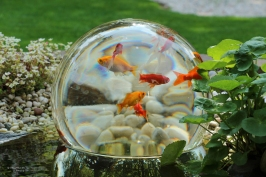 Magic-FishBowl-4