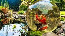Magic-FishBowl-6