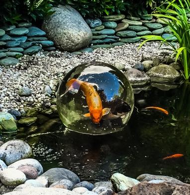 Magic-FishBowl-30