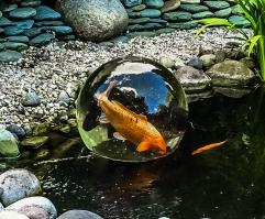 Magic-FishBowl-31